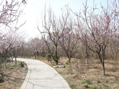 加上桃花潭公园的影响,周围有好多桃花树,幽静的小路,阵阵桃花香,加上