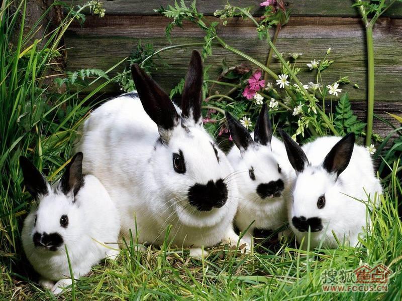 图:可爱的小兔子