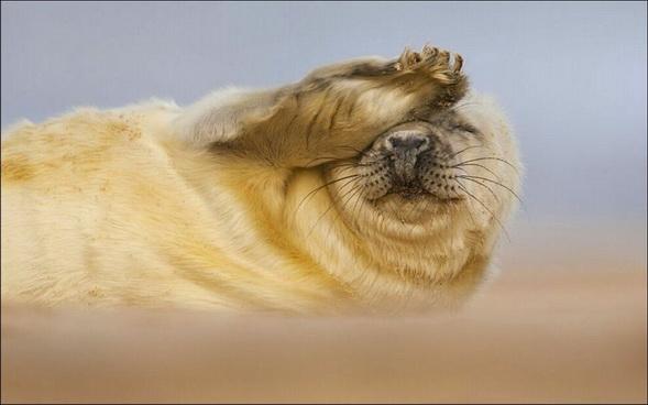 图:2012英国野生动物摄影大赛获奖作品
