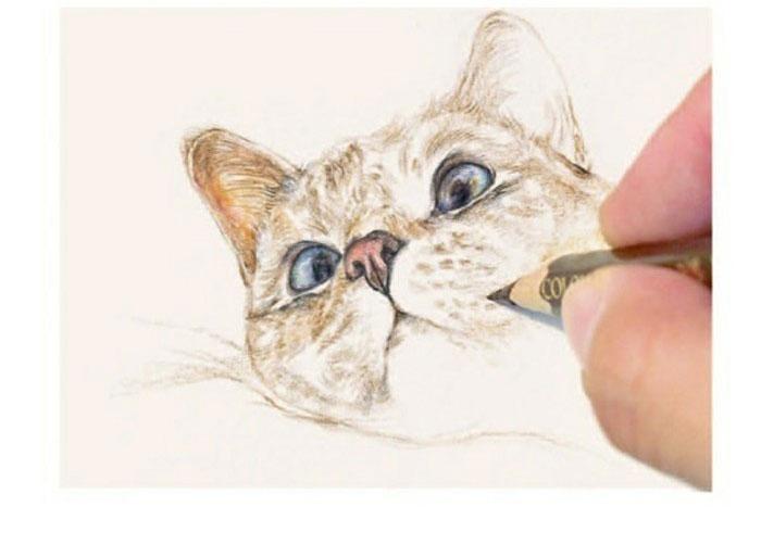 各种手绘小猫咪 卡哇伊