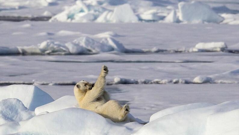 企鹅一家三口手绘